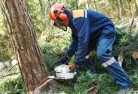Aberglasslyn Tree cutting services 21
